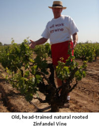 Vineyards1.jpg