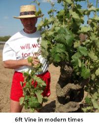 Vineyards3.jpg