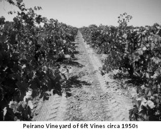 Vineyards4.jpg