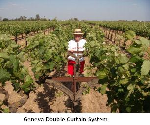 Vineyards6.jpg