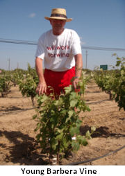 Vineyards7.jpg