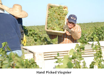 Vineyards8.jpg